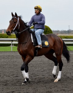 Morning Workouts at Keeneland Race Track - photo by Michael Dwyer