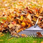 Curbside Leaf Collection Extended for Rochester