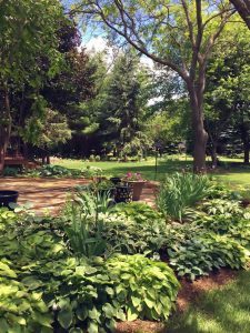 Photo of a backyard garden with trees, shrubs, and grass
