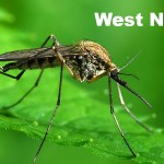 West Nile Virus Found in Oakland County